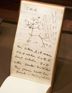 Darwin speculated on the origin of the species, drawing his first evolutionary tree. http://www.artofmanliness.com/2010/09/13/the-pocket-notebooks-of-20-famous-men/