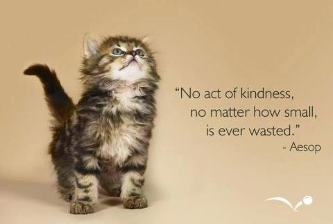 kindness-kitten-and-quote-no-act-of-kindness-no-matter-how-small-is-ever-wasted