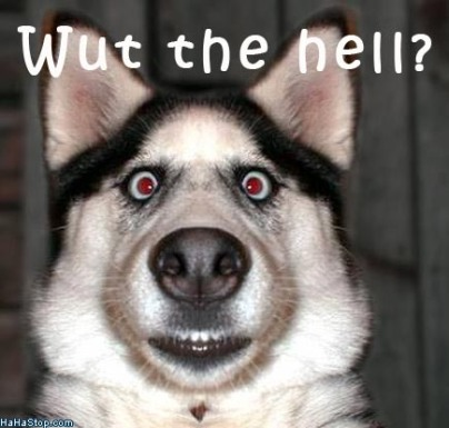 scared_dog_wut-the-hell